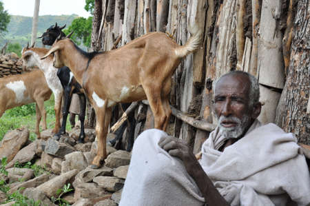 An elderly Ethiopian farmer and his goats Editorial