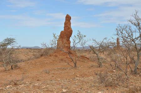 Termite Mound in Ethiopia