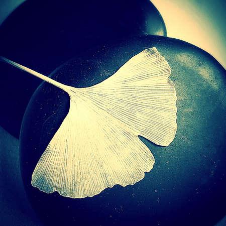 ginkgo leaf: Golden Ginkgo Leaf