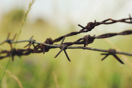 confine: The old, rusty barbed wire hidden in a grass