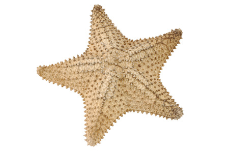 sea star: Sea star. Isolated on white background Stock Photo