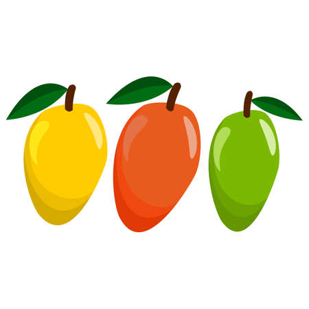 juicy: Juicy Mango Set in Yellow, Red And Green Vector Design Illustration