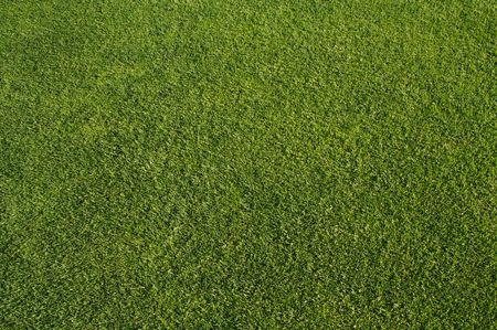 cut grass: Abstract fresh cut golf grass early in the morning.