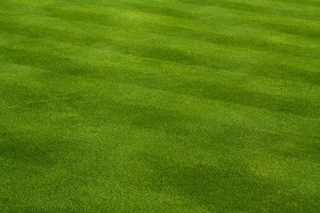 hockey cesped: Lush Green Grass con cortadora de c�sped patr�n  Foto de archivo