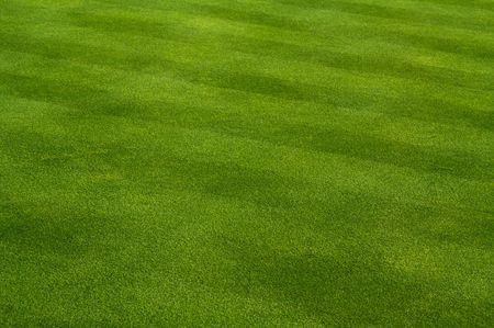 cut grass: Lush Green Grass with Lawn Mower Pattern Stock Photo