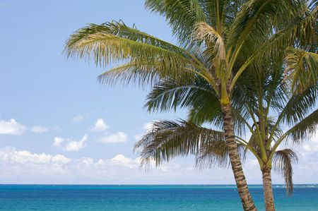 Palm Trees and Inviting Tropical Waters. photo