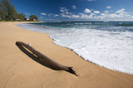 Tropical Shoreline and Driftwood on Kauai, Hawaii photo