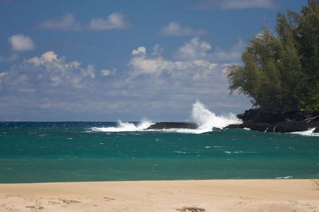 Tropical Shoreline and Trees on Kauai, Hawaii photo