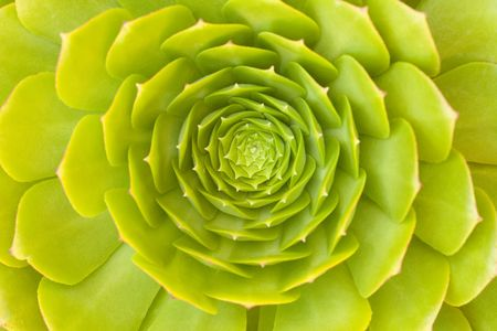 Beautiful Green Succulent Cactus Blossom Abstract Image. photo