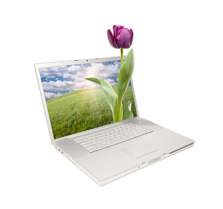 Silver Computer Laptop Isolated with Purple Tulip Extruding the Monitor Screen. Stock Photo - 7057609