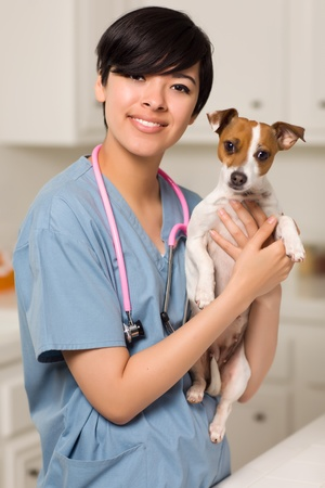 Smiling Attractive Mixed Race Veterinarian Doctor or Nurse with Puppy in an Office or Laboratory Setting. photo