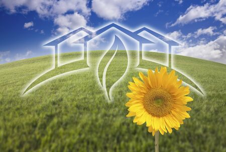 environmental awareness: Sunflower with Green House Ghosted Over Arched Fresh Grass and Blue Sky. Stock Photo