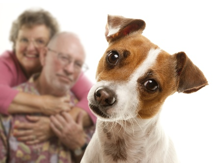 jack up: Adorable Jack Russell Terrier and Adoring Senior Couple Behind Isolated on a White Background. Stock Photo