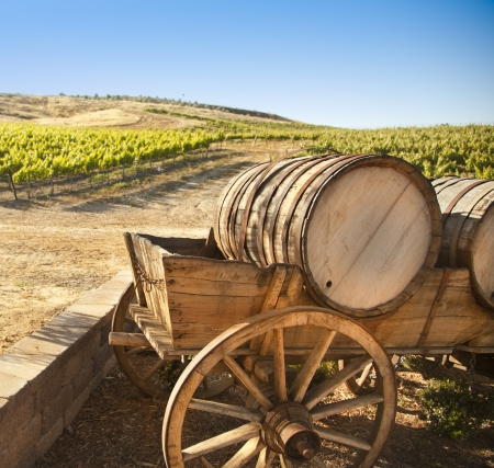 Grape Vineyard with Vintage Barrel Carriage Wagon  photo