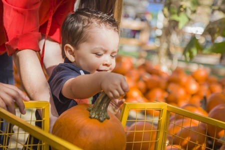 mixed race baby: Happy Mixed Race Family Picking Pumpkins at the Pumpkin Patch.