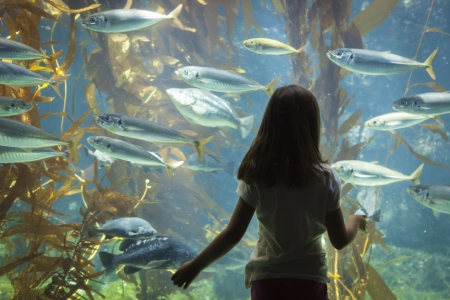 stunned: Amazed Young Girl Standing Up Against Large Aquarium Observation Glass.