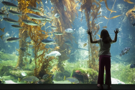 Amazed Young Girl Standing Up Against Large Aquarium Observation Glass. photo