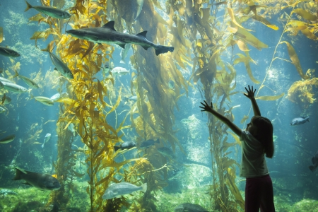 Amazed Young Girl Standing Up Against Large Aquarium Observation Glass Reaching for Leopard Shark. Stock Photo - 20145650