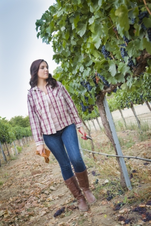 mixed race girl: Young Mixed Race Female Farmer Inspecting the Wine Grapes in the Vineyard.