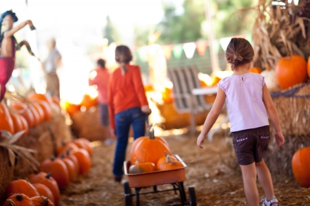 fall festival: Cute Little Girls Pulling Their Pumpkins In A Wagon At A Pumpkin Patch One Fall Day.