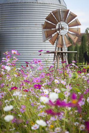 homestead: Antique Farm Windmill and Silo near a Flower Field in a Beautiful Country Outdoor Setting.