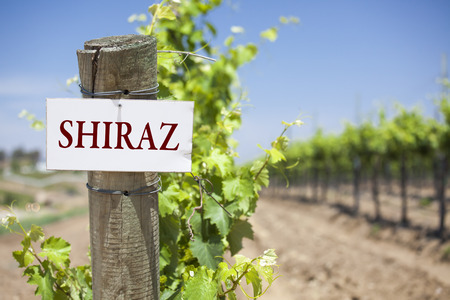shiraz: Shiraz Sign On Post at the End of a Vineyard Row of Grapes.