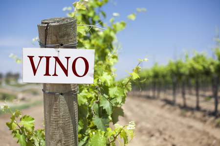 Vino Sign On Post at the End of a Vineyard Row of Grapes. photo