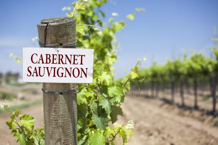 cabernet: Cabernet Sauvignon se�al en el puesto al final de un vi�edo Fila de uvas.