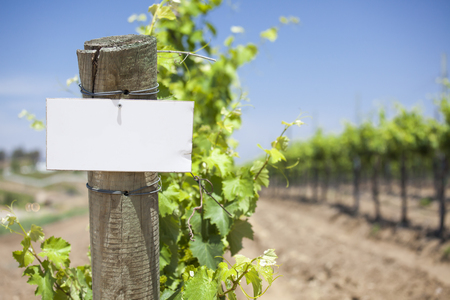 farm sign: Grape Wine Vineyard with Wooden Post Holding Blank Sign Ready for Your Own Text. Stock Photo