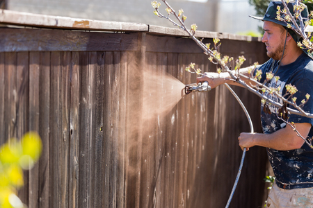finishing touches: Professional Painter Spraying House Yard Fence with Wood Stain.