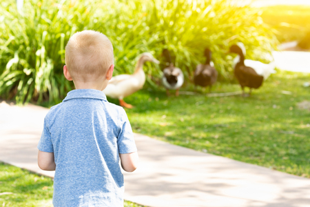 Curious Young Boy Watching The Ducks At The Park.