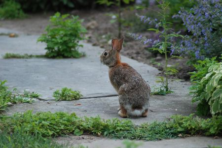 Bunny rabbit on the sidewalk
