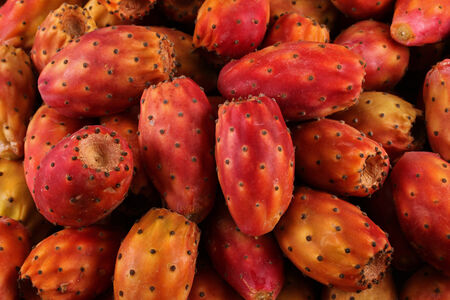 prickle: Prickle Pear or Nopal