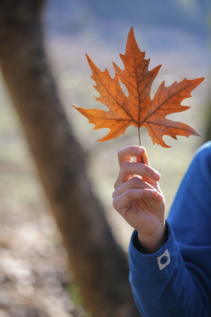 young leave: Leave on the autumn with young woman. Stock Photo