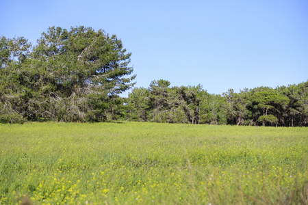 cyprus tree: Tree and meadow in Cyprus.
