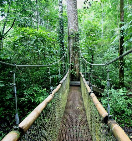 Zip lining or canopy in Costa Rica is a definate must! Heres a bridge on the tour through Jaco, Costa Rica. Banco de Imagens