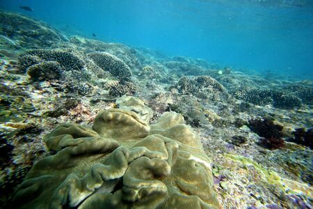 An Indonesian reef shows it's colors. This reef is what makes perfect waves crash up above. Banco de Imagens - 2377986
