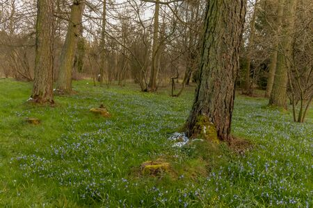 early spring in the spring forest Archivio Fotografico