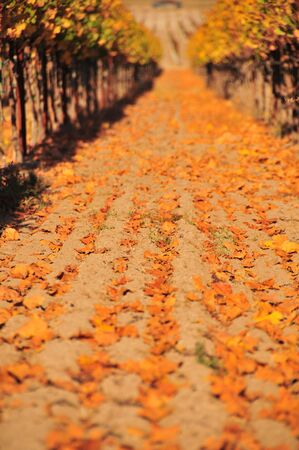 Leaves on the ground in Napa, selective focus