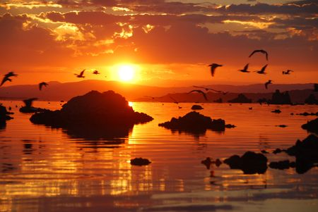 Seagulls flying over lake during sunrise