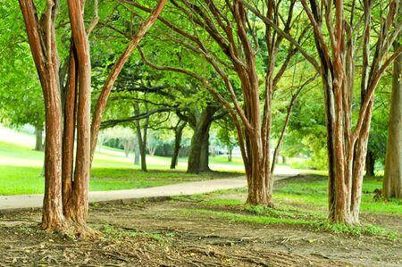 Bomen en gras aan de kant van een jogging pad Stockfoto
