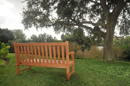 Empty wood bench on grass by a tree overlooking a river