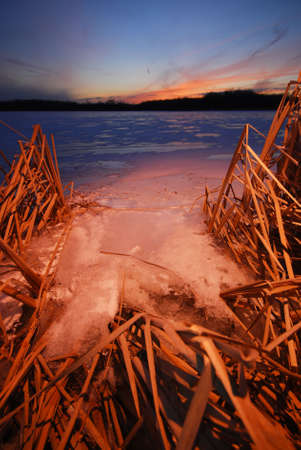 Frozen lake with reeds on the shore with snow in the winter. photo