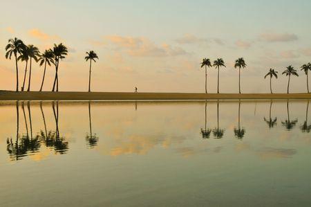 Palme si riflettono in un lago al mattino  Archivio Fotografico - 6110029