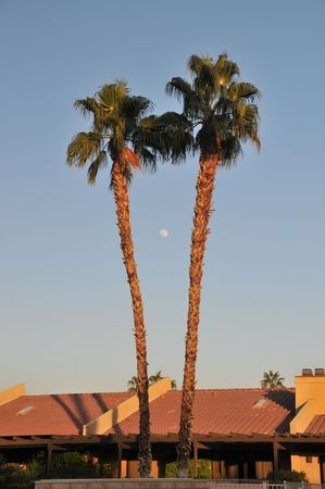 Two palm trees with the moon between them.