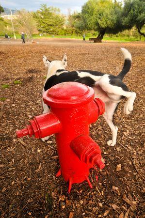 pee pee: Un cane non orini su un idrante in un parco