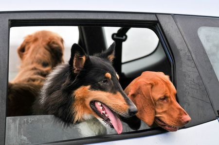 Three dogs looking out both car back windows. Stock Photo