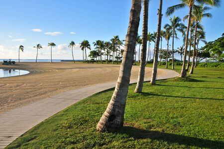 Palm trees on grass follow a running path with sand