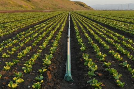 sprinklers: A single irrigation pipe lays in a field of plants Stock Photo