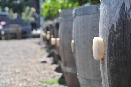 planters: Barrels with a cork in a row act as planters. Stock Photo